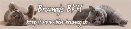 Brumag's
